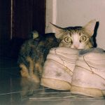 Sneaking Up On The Smelly Sneakers by pergamjee