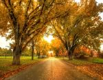 Autumn in Boys Town by FramedByNature