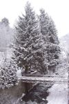 Snow covered tree In Barages by arporter