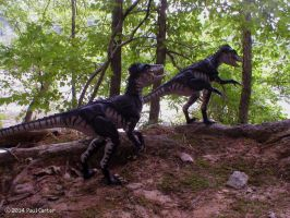 Deinonychus on the prowl. by Carnosaur