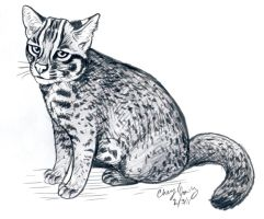 Iriomote Cat by silvercrossfox