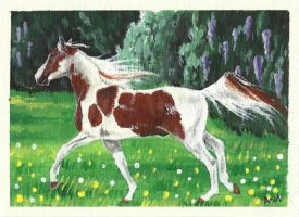 Saddlebred ACEO by Fire-n-ash