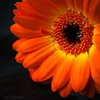 orange dreams III by JoannaRzeznikowska