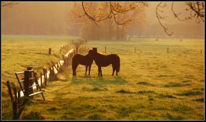 Two early-morning horses by jchanders