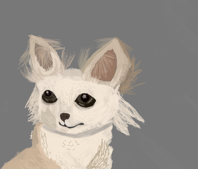 Chihuahua by Terfoxie