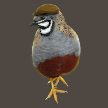 Quail Digital Painting (with video) by channellehazel