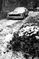 Pinto in the Snow by Bawwomick