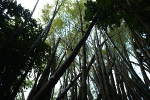 Bamboo I by KW-stock