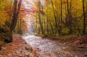 Polish Golden Autumn by topperGfx
