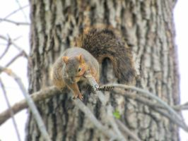 FoxSquirrel03May2017-0020 by MSchmidtProductions