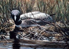 nesting loon by traits