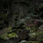 In the Harz Mountains by Noirerora