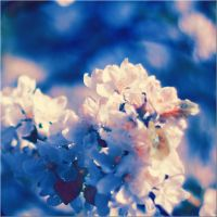 spring flower by 5cOrpi