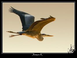 a gold heron flying by AMROU-A