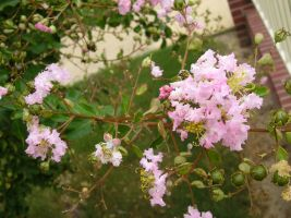 FREE STOCK, Pink Tree Flower by mmp-stock