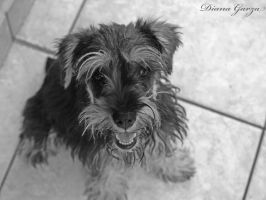 my little dog by shispis
