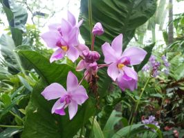 Orchids 1 by Metacharis