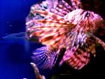 Lion Fish by DemonicKareBear
