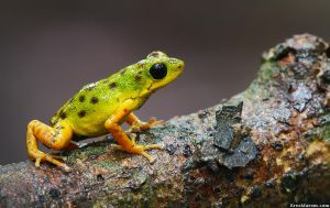 Ascent by erezmarom