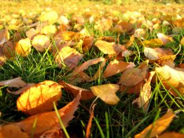 Autumn Leaves Forever. by HaanaArt