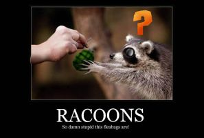Racoons by Gallantnightmare