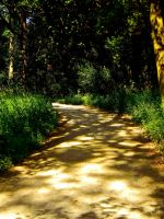 Summer Pathway 3 by TropicalxLondon