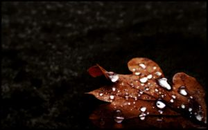Autumn Jewels III by l8