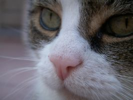 Cat nose by SianaLee