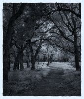 The Lane by labba1
