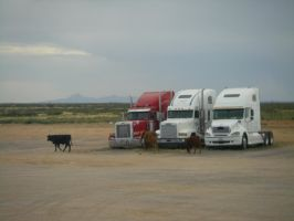 Free Range Truck Stop by archambers