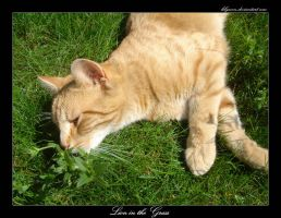 Lion in the Grass by Lilywen