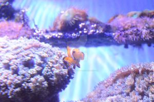 Nemo! by KayleighBPhotography