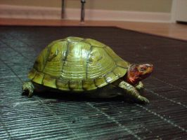 Turtle 3 by animalstock
