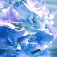 blue wind by illusionality