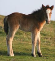 Foal by witchfinder-stock