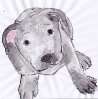 Watercolor Pit Bull by EnderW0lf