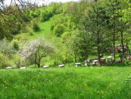 The Beehives of my Grandfather by artlilac