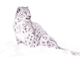 Snow Leopard for Meigas by ahillamon