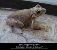 Cuban Treefrog Stock by Cassy-Blue