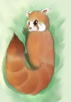 Red Panda by Perrydotto