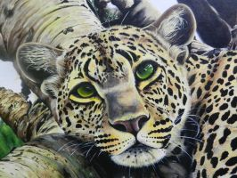 Leopard Face by ChalkyCanvas