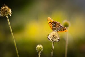 The Farmland Butterfly by Oo1o111