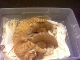 Mama Cat 2 by KnK-stock