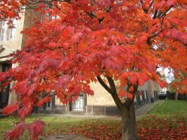 tree with red leaves 2 by ingeline-art