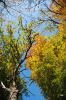Fall 2008 by horticulture510