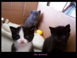 the kittens by gemsywooo