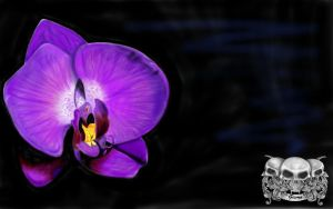 Orchid by gismo84