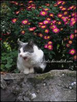 684 by evy-and-cats