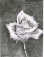 Charcoal Rose by Abaez40