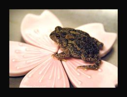 sakura toad by strawberrykangaroo